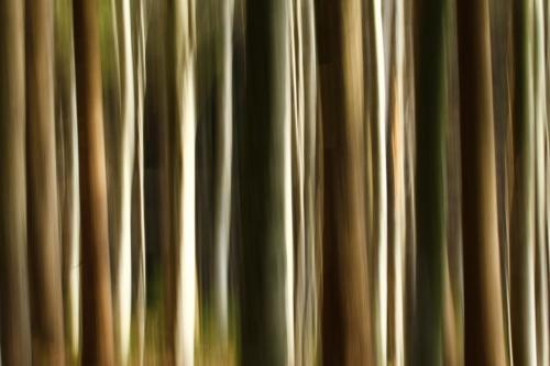 2-Trees-Germany tn