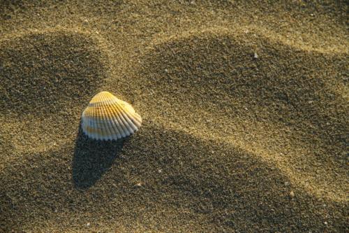 5-Beach-AdriaticSea tn