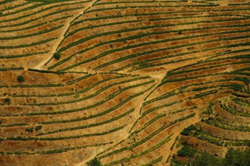 9-Wine-Portugal tn